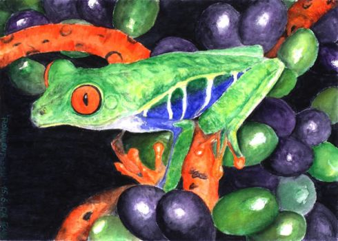 Red-eyed Tree Frog by orange90
