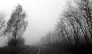 Trees flank the lonely road by krigl