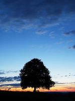 The lone Tree after Sunset by Osiris81