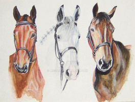 portrait three horses by Lissa75