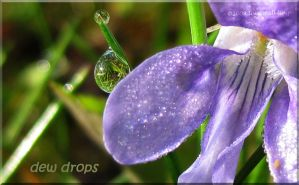 dew drops by WalkerGermany