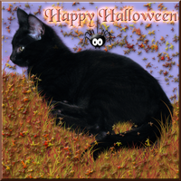 Happy Halloween Card 2013 by WDWParksGal-Stock