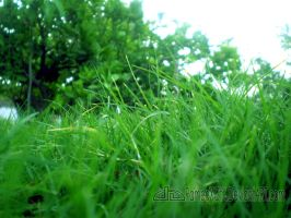 Vista Natural Lawn at Khairpur by rameexgfx