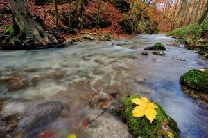 Wetfeet Creek II by d-minutiv