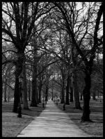 The Avenue by the-one-and-only