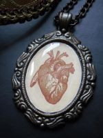 Victorian Medicine  Anatomical Print Red Heart by NaamahVonhell