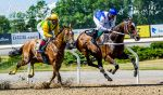 Horse Racing 526 by JullelinPhotography