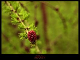 The Cone by infazz