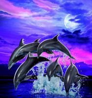 Moonlight dolphins by Real-Warner