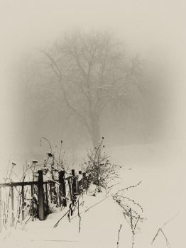 fogy and snowy mood by BobRock99
