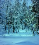 UNRESTRICTED - Winter Blues Premade by frozenstocks
