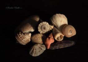 My Sea Treasures by chalutplease