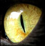 Cats eye by PetLovers