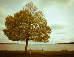My Perfect Tree by JM-P
