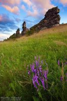 Devils Wall Flowers by MatthiasHaltenhof