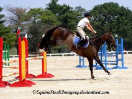 Warmblood 20 by EquineStockImagery