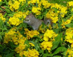 Spring Squirrel by AfroDitee