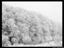 Long gone snow by ciprinel