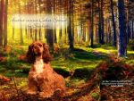 Curious-cocker-spaniel for HP by JuneButterfly-stock
