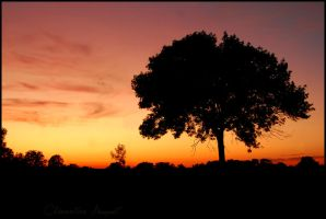 Sunset by Clementine-pictures