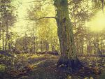 Forest 52 by Amalus