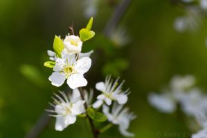 :: Spring Feeling :: by AmyranthPhotography