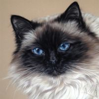 Cat Pastel 'Schuey' by LouiseMarieFineArt