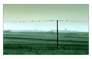 Southwold Marshes by Pete-B