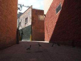 Alley with Pidgeons by AntiRetrovirus