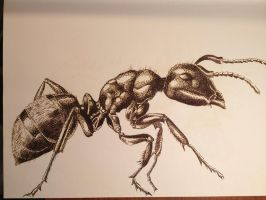 ant by DethGunz