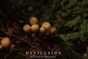IMG_3120 by D3vilusion