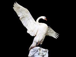 Mute Swan remastered gallery up! by Meddling-With-Nature