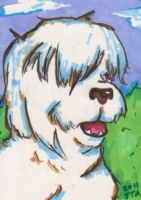 Old English Sheepdog by AbruptlyNatural