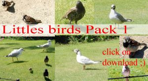 Littles birds PACK 1 by whynotastock