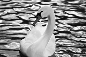 Swan by A-Man-With-No-Art