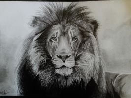 Lion drawing by alainmi