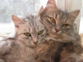 My Cats by Sid293