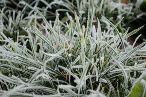 Frozen Grass by ThoughtMemory