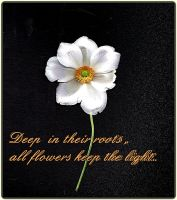 Flower quote by April-Mo