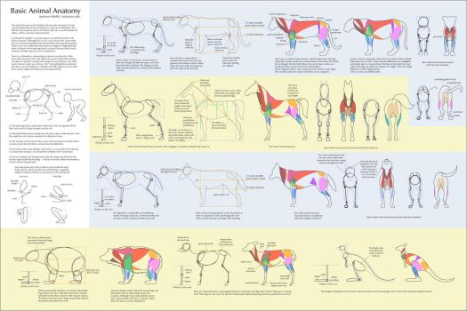Basic Animal Anatomy by Majnouna