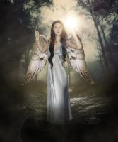 Angel by this-is-the-life2905