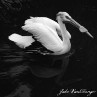 elegance afloat by SublimeBudd