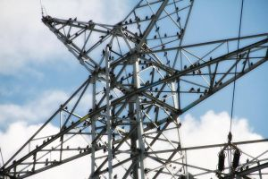electricity pylon with starlings by Tjabula