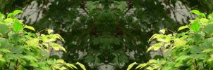 Organic Symmetry 14 by meathive