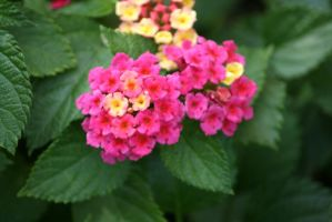 Lantana in Flora garden 4 by ingeline-art