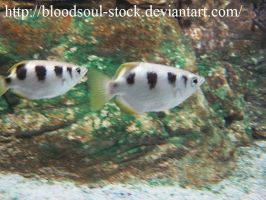 Fishes 01 by Bloodsoul-Stock