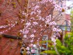 Plum Tree Spring 3 by LordNobleheart