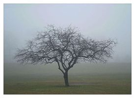 Fogged Tree by PhotographChik