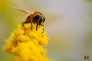 Bee by geeson