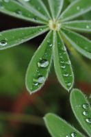 rainy leaves by AngelicPicture